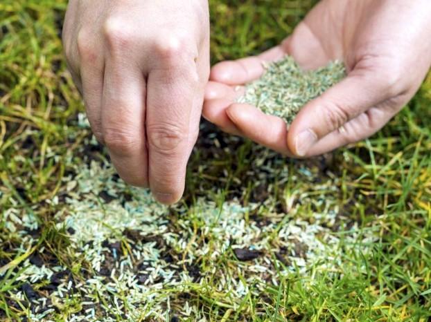 Семена для газона: выбор и посадка