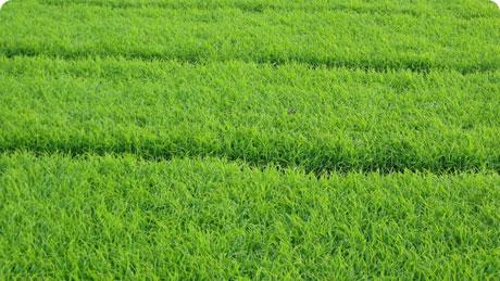 Премиум газон