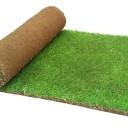 Какой газон выбрать: рулонный или посевной?