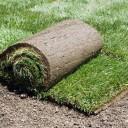 Мифы о рулонном газоне