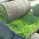 Создание газона: основные этапы