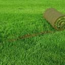 Виды газонной травы и ее особенности