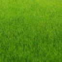 Гидропосев газона
