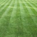 Партерный (английский) газон